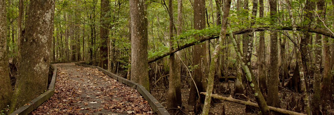 Deeper than any Forest Primeval